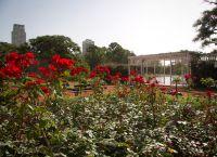 Сад роз в парке Трес-де-Фебреро