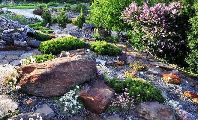 Арктический ботанический сад