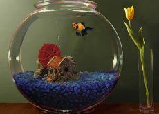 Rodzaje małych ryb akwariowych