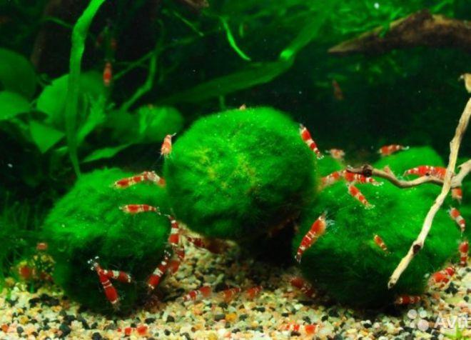 врсте акваријума1