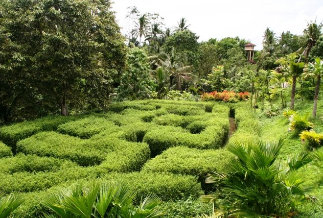 Ботанический сад Убуда