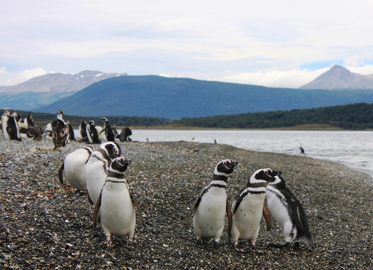 Остров пингвинов Isla Martillo