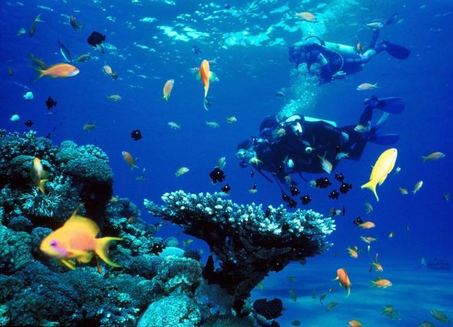 Подводный мир Утилы
