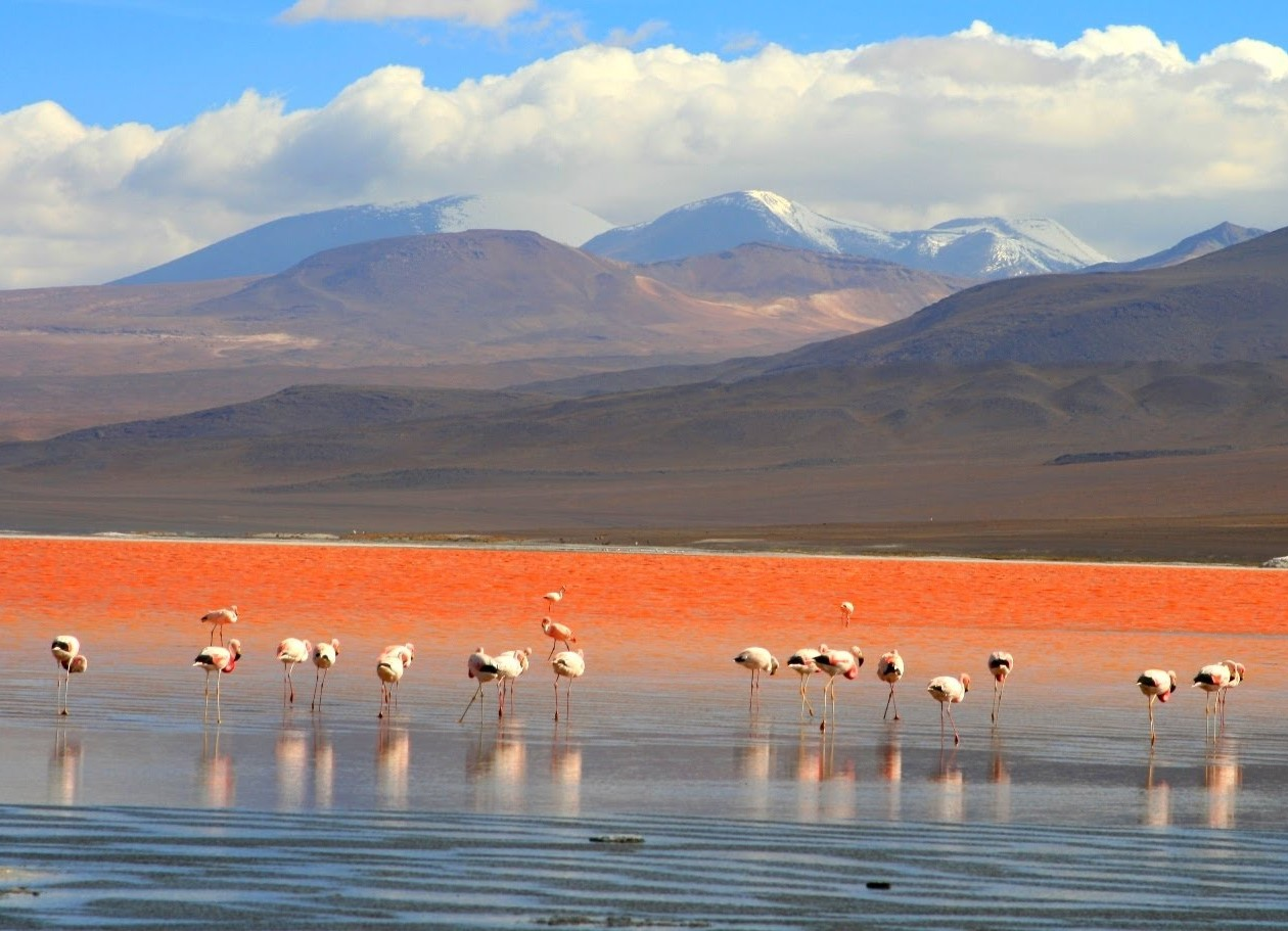 Долина гейзеров и фламинго