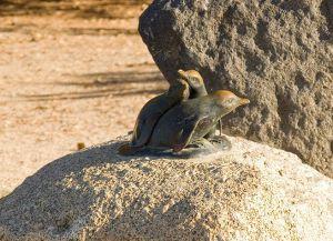 Памятник пингвинам