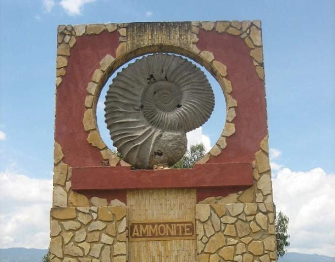 Аммониты