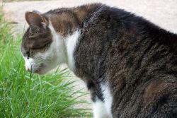 какви витамини да даде котка