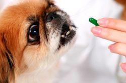 витамини за развој паса