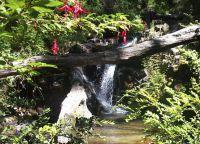 Территория природного заповедника Reserva Nacional Nonguén
