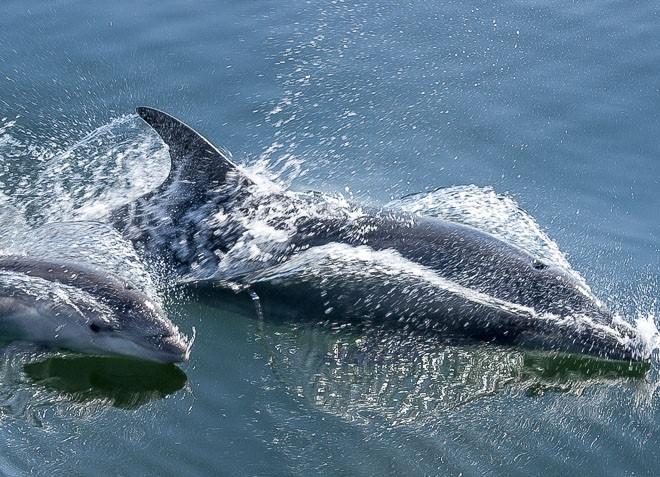 Dolphin Tours Namibia