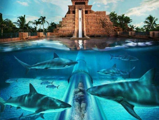 Экстремальные развлечения в аквапарке Aquaventure