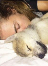 Кара Делевинь завела собаку