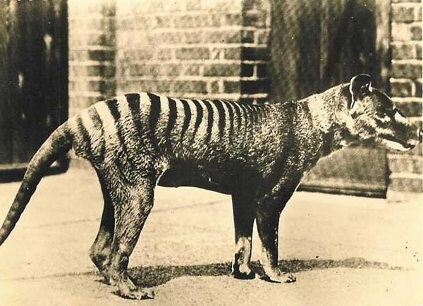 Które zwierzęta mieszkają w Australii 5