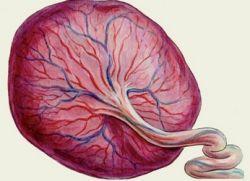 структура плаценте