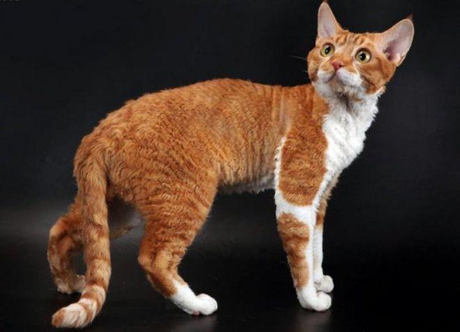 Które koty nie są uczulone -5_0