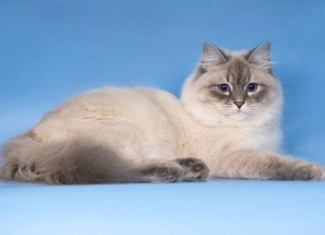 Które koty nie są uczulone? -9_0