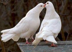 љубав и заљубљеност