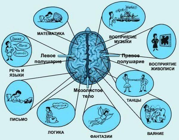 функције леве хемисфере мозга
