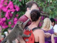 Što vidjeti u Baliu22