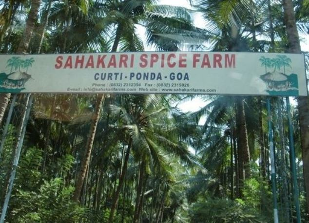 što možete vidjeti na Goa6