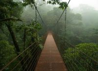 Тропический дождь