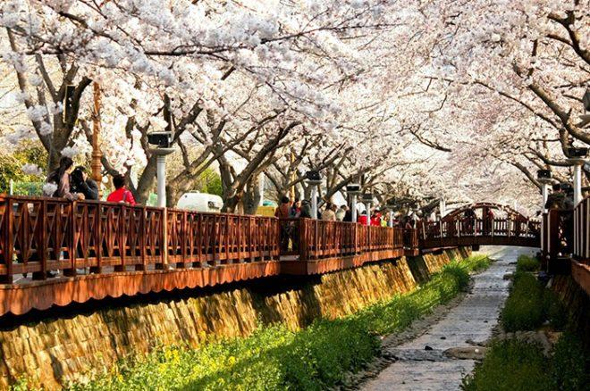 Весна в Южной Корее