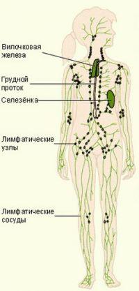 Где расположены лимфоузлы у человека