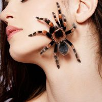 jak pozbyć się strachu pająka
