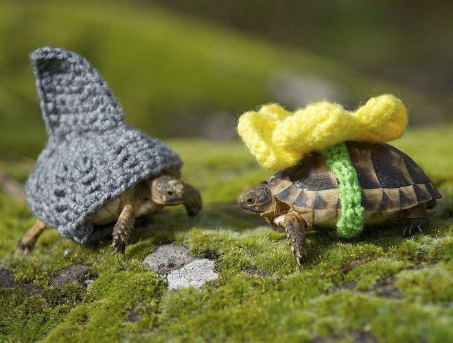 черепаха не ест и спит