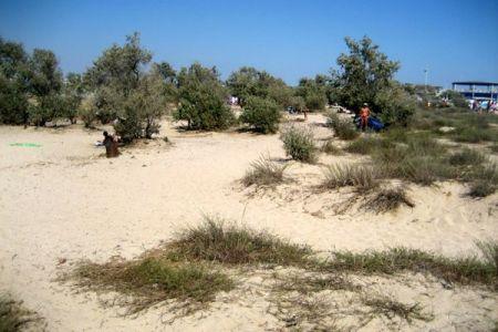 Dzika plaża w Evpatorii