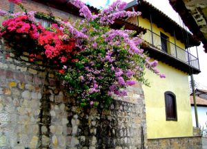 Дома города украшены цветами