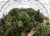 Павильон с настоящим тропическим лесом