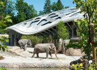 Слоны в вольерах