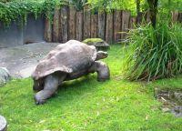 Гигантские черепахи Цюрихского зоопарка
