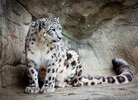 Хищник Цюрихского зоопарка