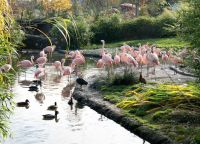 Красота зоопарка в Цюрихе