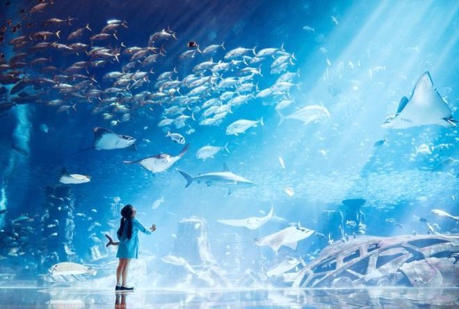 Аквариум отеля Atlantis