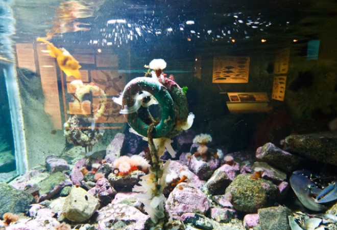 Лофотенский аквариум