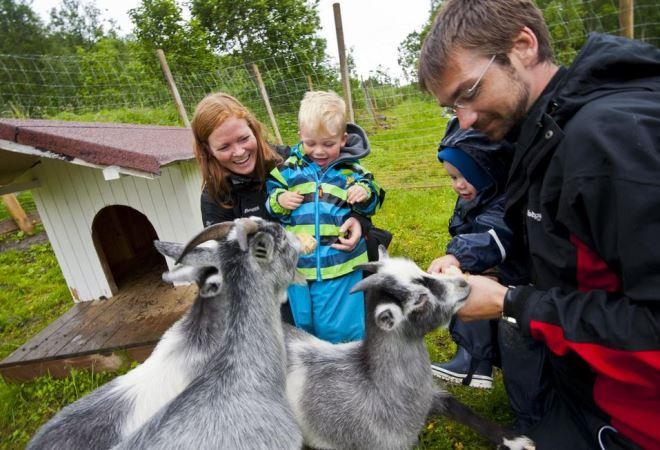 Мини-зоопарк в Тромсё